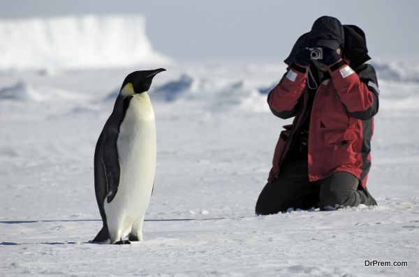 Penguin photos
