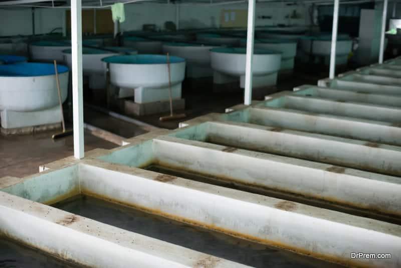 starting-an-indoor-fish-farm