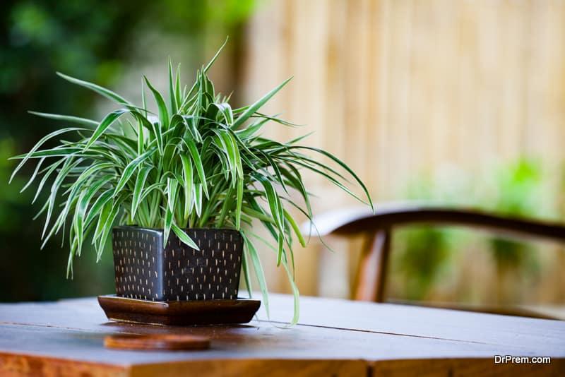 Get a plant