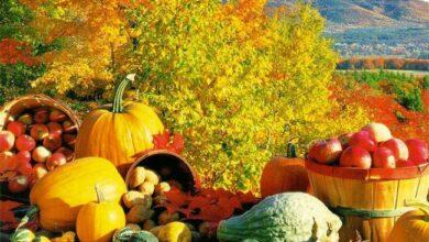 fall_season_fruits - Dr Prem