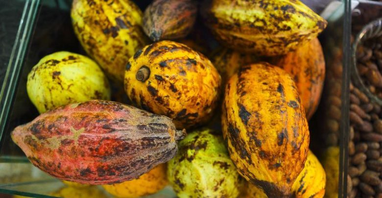 underestimated-cocoa-for-its-health-benefits