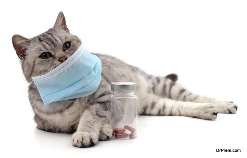 coronavirus infections in cat