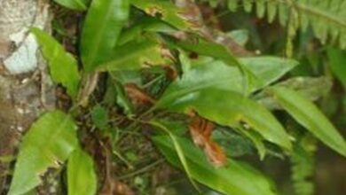 Photo of Increase in creeping vines' growth changing southern US forests' patterns: Study