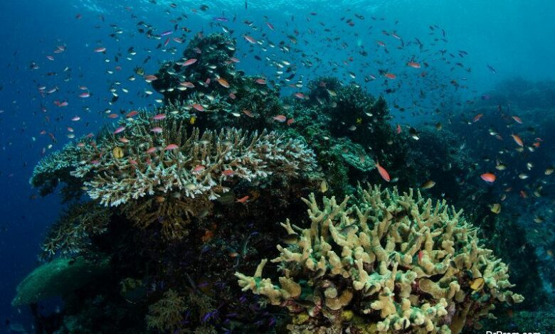 Coral reefs threatened by acidic seas