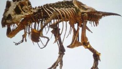 Photo of New-found duck-billed dinosaur could run 28 miles per hour!
