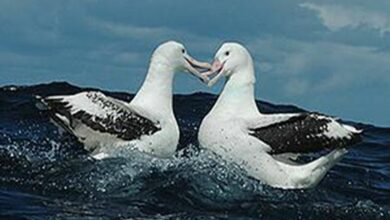 Photo of Endangered seabirds waiting for sympathy