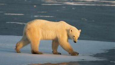 Photo of Arctic sea ice level drops sharply!