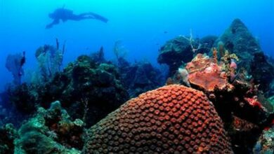 Photo of Satellite tracking of ocean waters can save corals