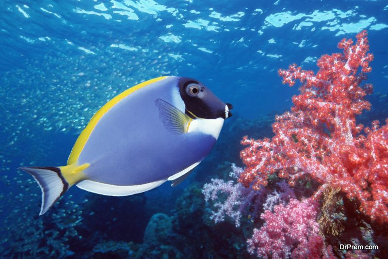 Conserve-the-ocean