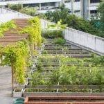 designing-your-own-rooftop-garden