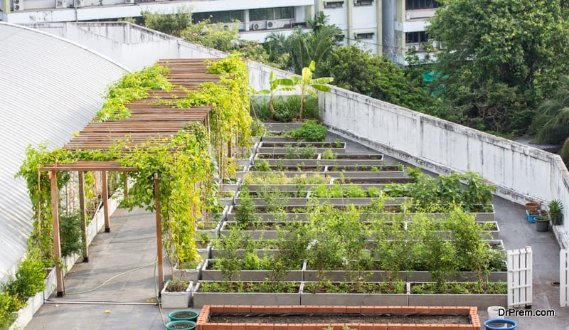 designing-your-own-rooftop-garden