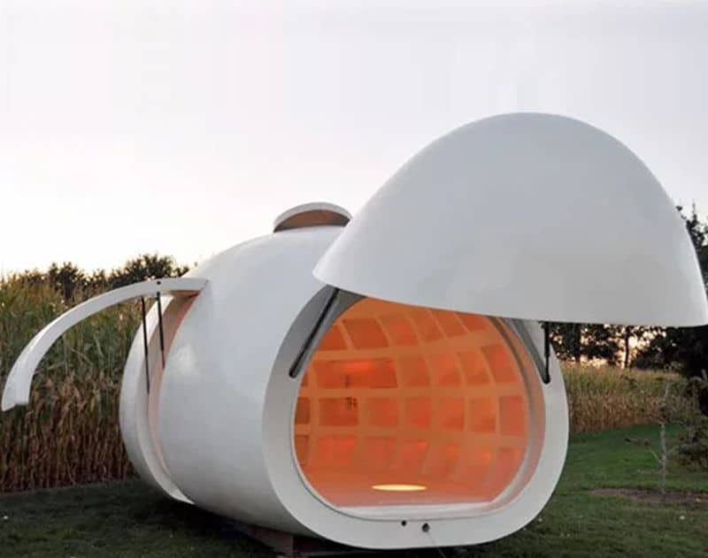 Egg Shaped Backyard