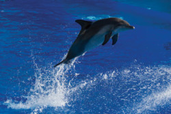 Dolphins Offer Hope for Diabetics