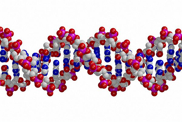 B0004906 DNA double helix
