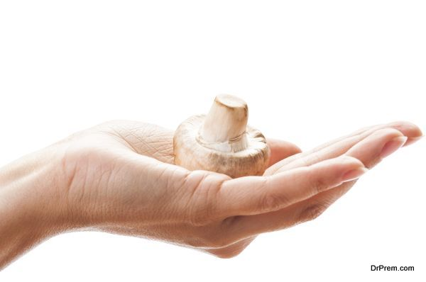 Female hand holding a champignon mushroom in the palm. All on white background.