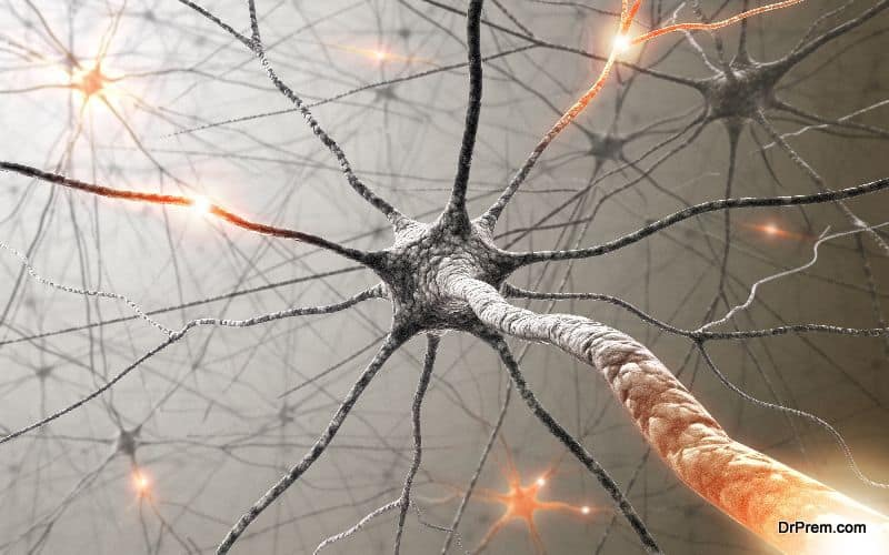 neural response