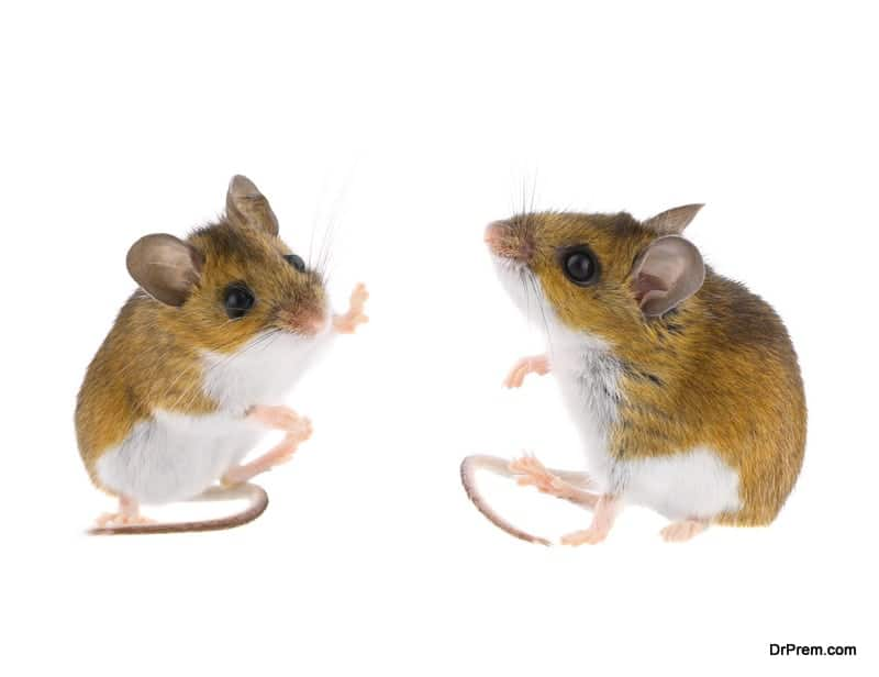 alcohol for the brain was performed on mice