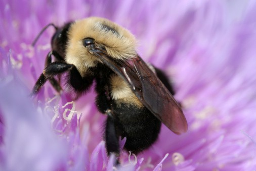 How to deal with bee sting
