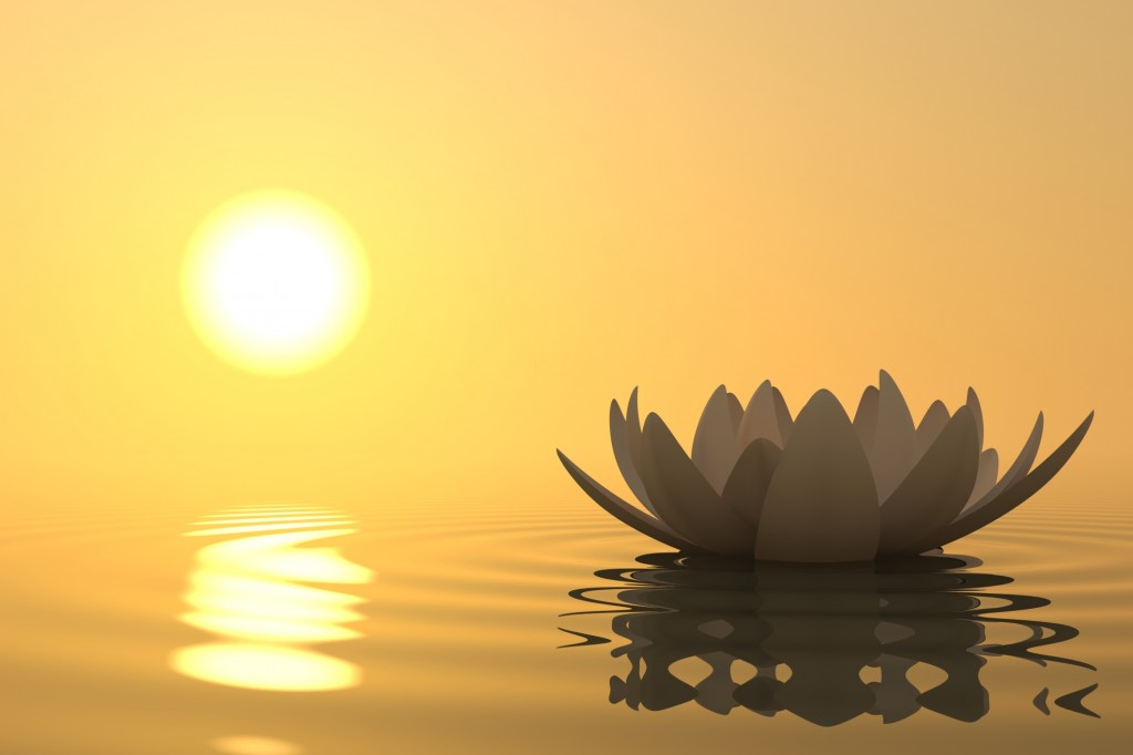 Lotus Flower looking Beautiful at the time of Sunrise