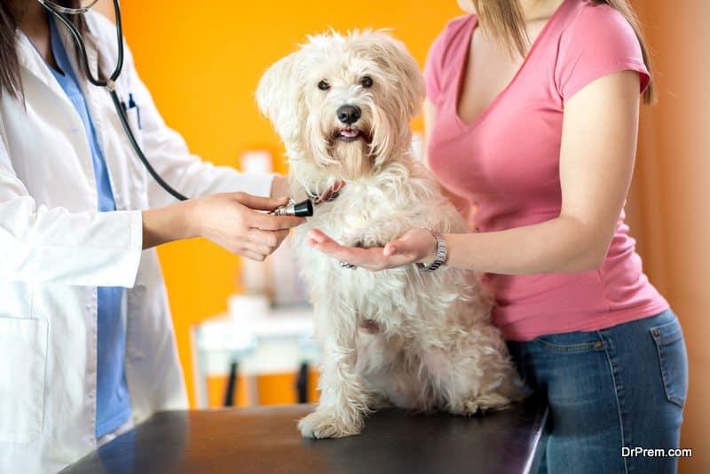 pets medically checked