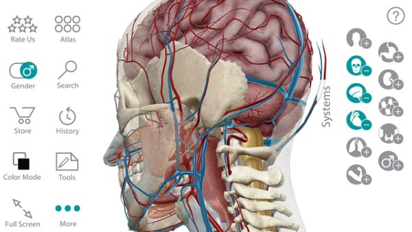 3 D Human Anatomy Atlas