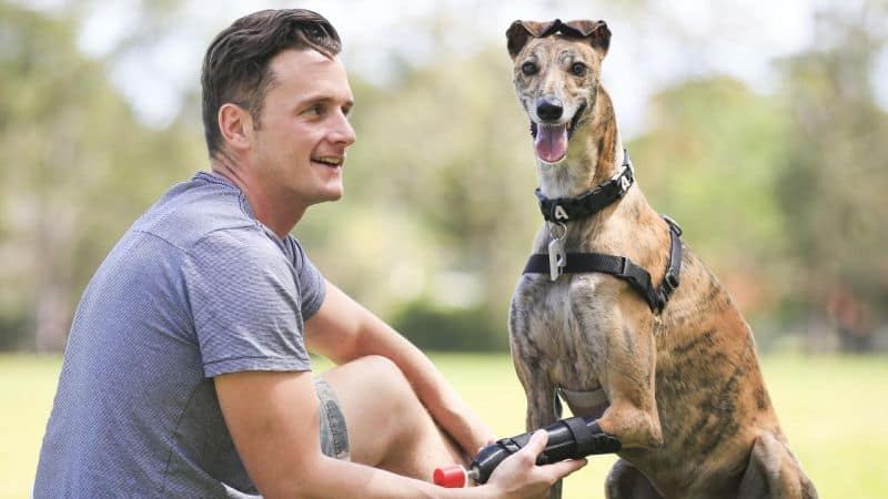 Millie-a-dog-in-Australia-became-the-first-dog-ever-to-get-a-3D-printed-leg-in-Australia