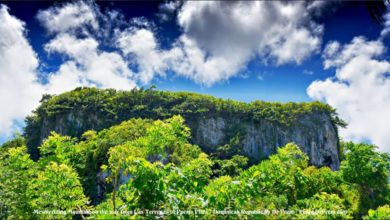 My Photography - Dominican Republic is Green Heaven On Earth - Dr Prem Jagyasi 1