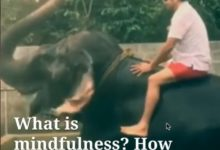 Photo of Brief Video About Mindfulness By Dr Prem Jagaysi