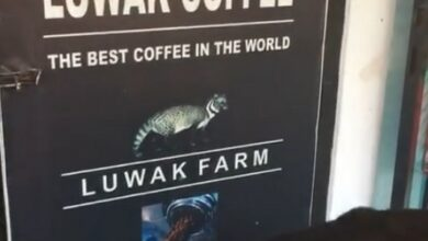 Did You Know Worlds Best Coffee Known As Luwak Coffee Indonesia - Dr Prem Jagaysi