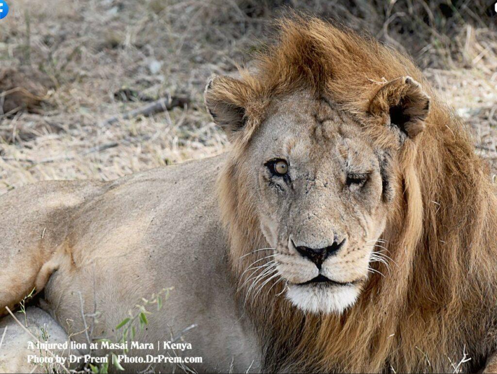 Masai Mara, Considered To Be World's Most Popular Wild Life Safari Destination Kenya - Dr Prem Jagyasi 3