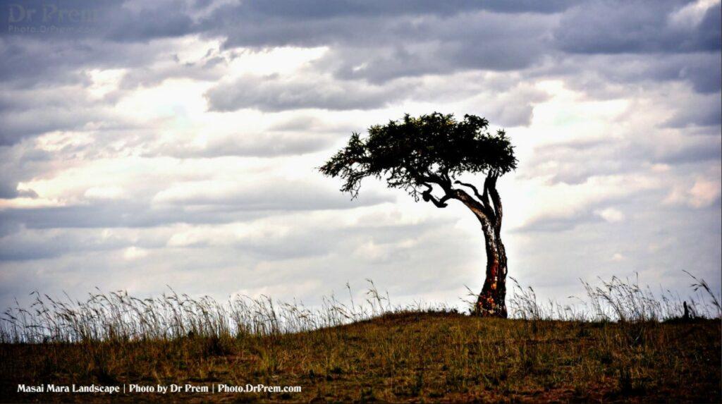Masai Mara, Considered To Be World's Most Popular Wild Life Safari Destination Kenya - Dr Prem Jagyasi 4