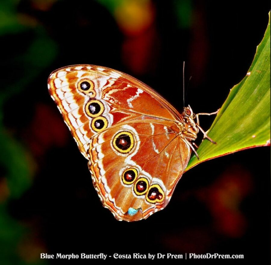 Photos You Have Never Seen Before, Pura Vida - Costa Rica - Dr Prem Jagyasi 1