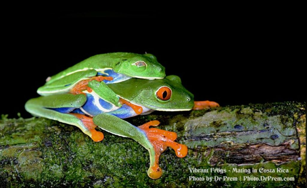 Photos You Have Never Seen Before, Pura Vida - Costa Rica - Dr Prem Jagyasi