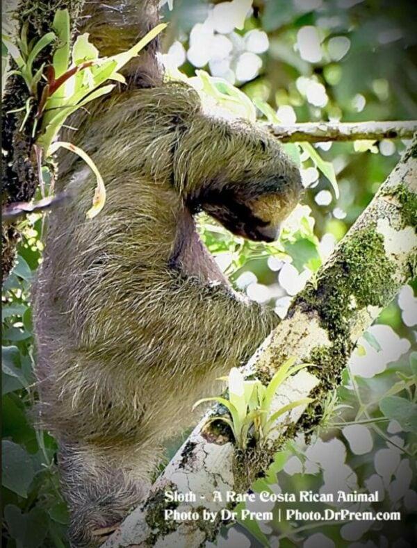 Photos You Have Never Seen Before, Pura Vida - Costa Rica - Dr Prem Jagyasi 6