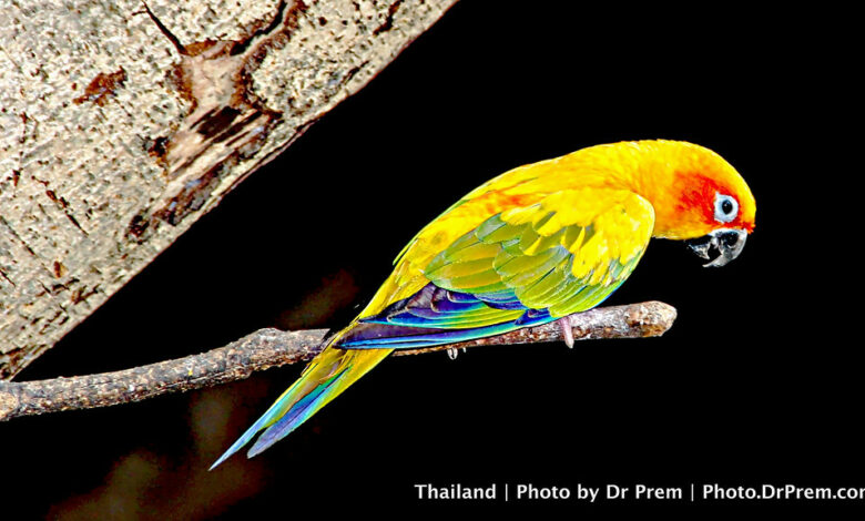 Photo of Unleash Your Charm In Full Color–Ode To The Parrot