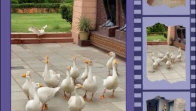 Dr Prem Converting A Retreat Into A Wellness Resort
