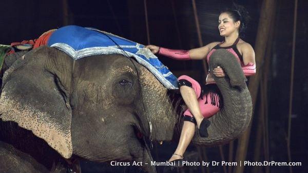 Elephant Show Rambo Circus Mumbai-L