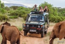 History-of-wildlife-tourism