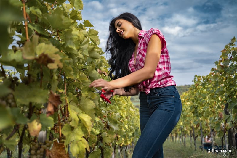 Pretty European woman working in vineyard