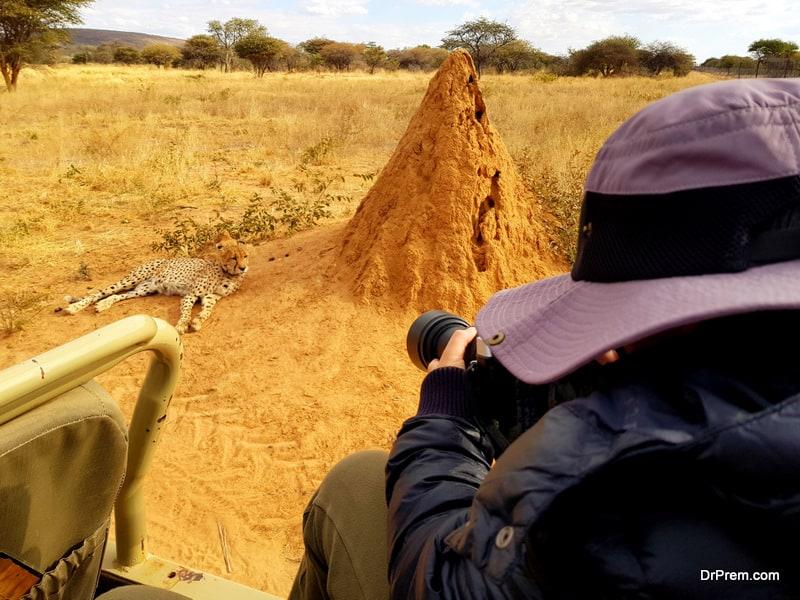 wildlife photographic opportunity