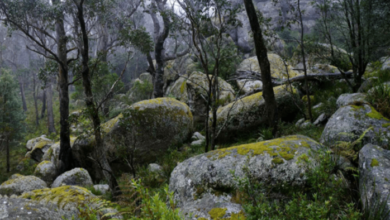 Photo of My trip to Cathedral Rock National Park, NSW, Australia