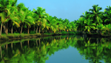Photo of Kerala backwater tour pacakge – Attractions to see at Kerala backwater
