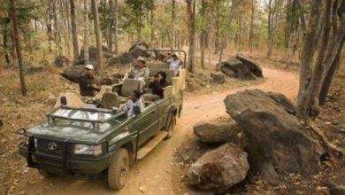 Photo of Khajuraho Wild life safari – Special attraction