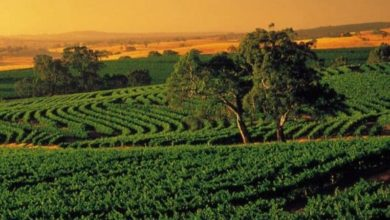 Photo of Things that make Barossa Valley a must visit place
