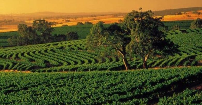 Things that make Barossa Valley a must visit place