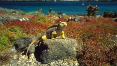 Photo of Galapagos National Park, Ecuador