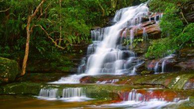 Gondwana Rainforests, Australia