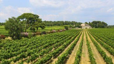 Photo of Languedoc – France