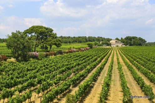 Languedoc - France