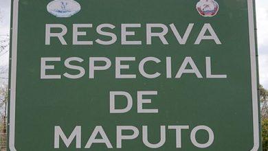 Maputo Special Reserve, Mozambique